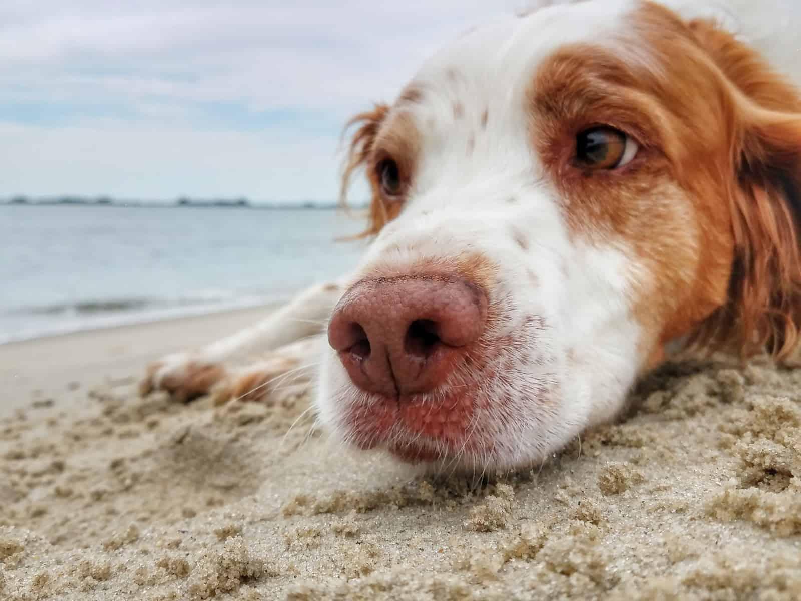 perro en playa es