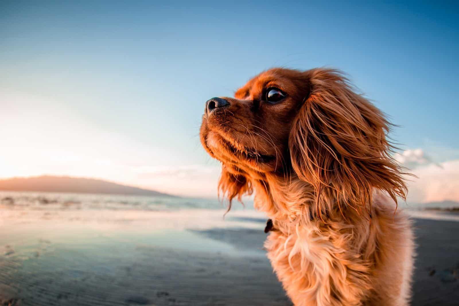 perro playa es