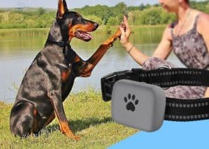findpet collier GPS chien