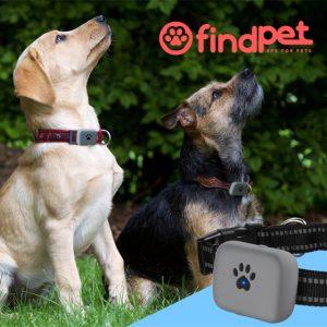 findpet max localisateur gps pour chiens