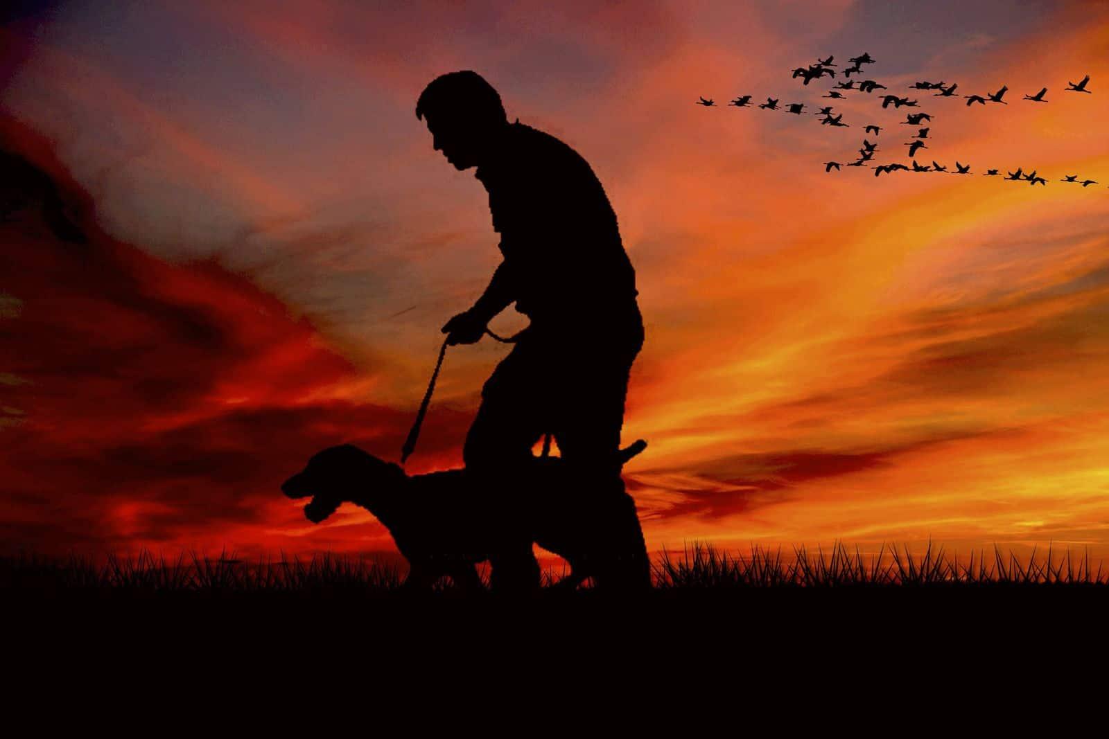 perro campo caza es