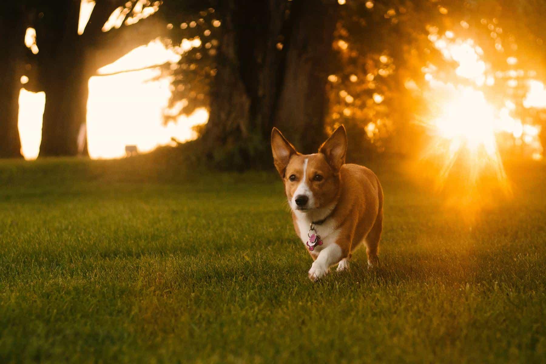 perro campo sol es