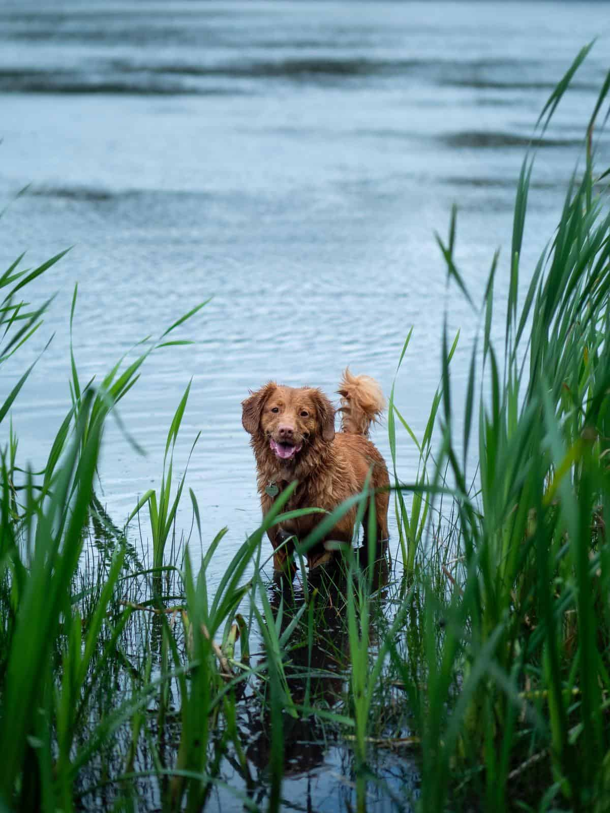 perro agua portada es