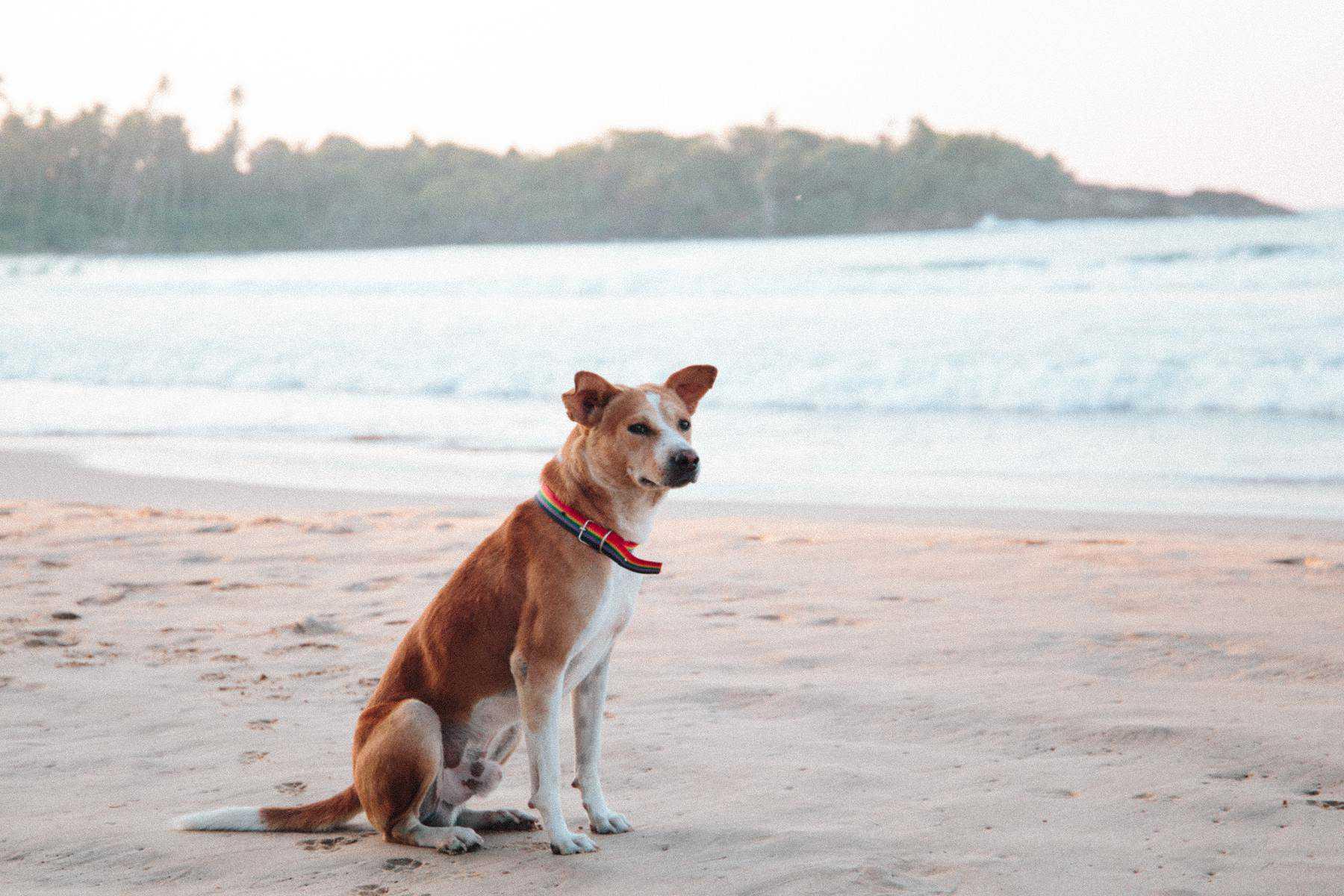 perro playa portada es
