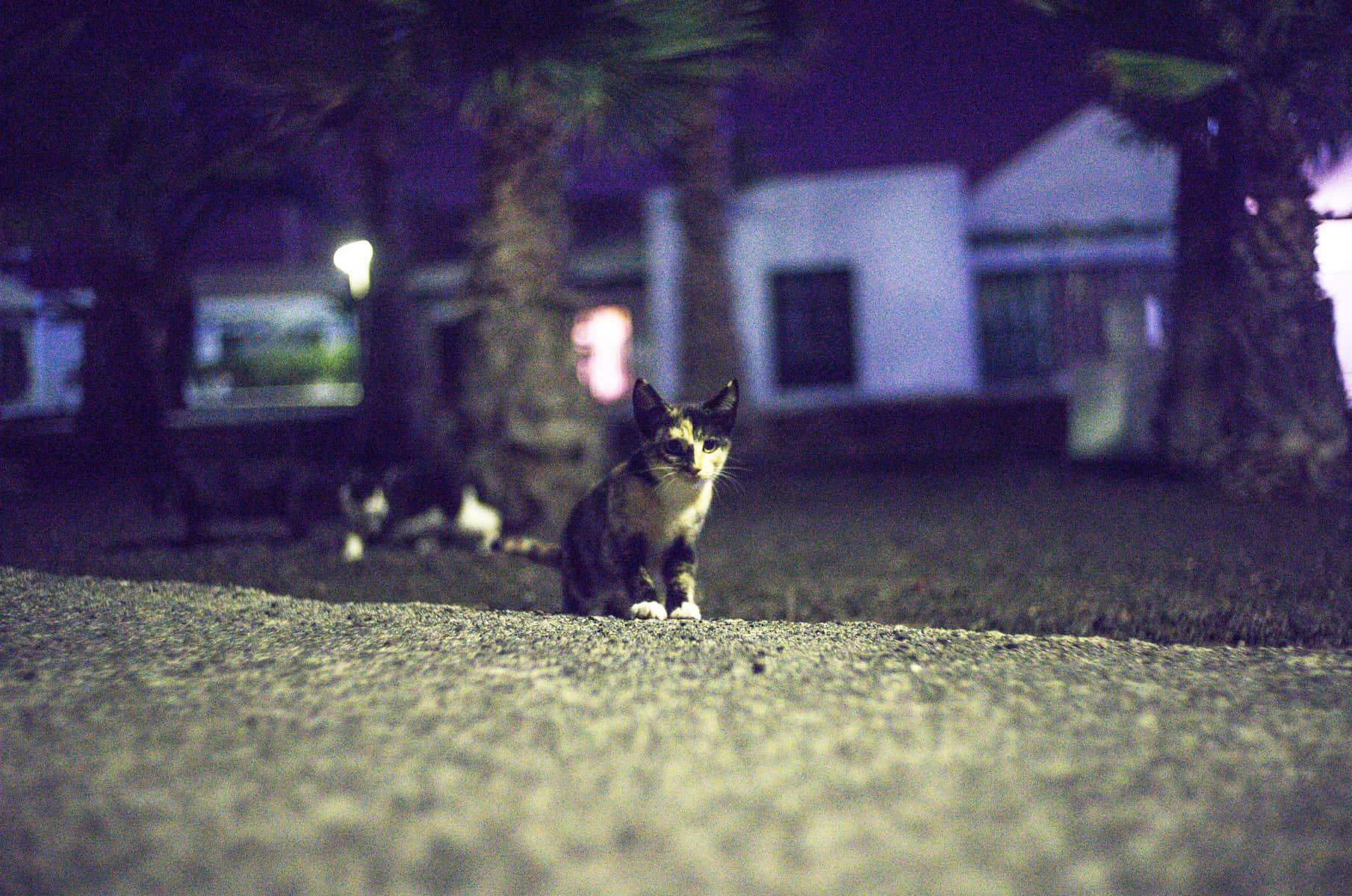 gato perdido noche