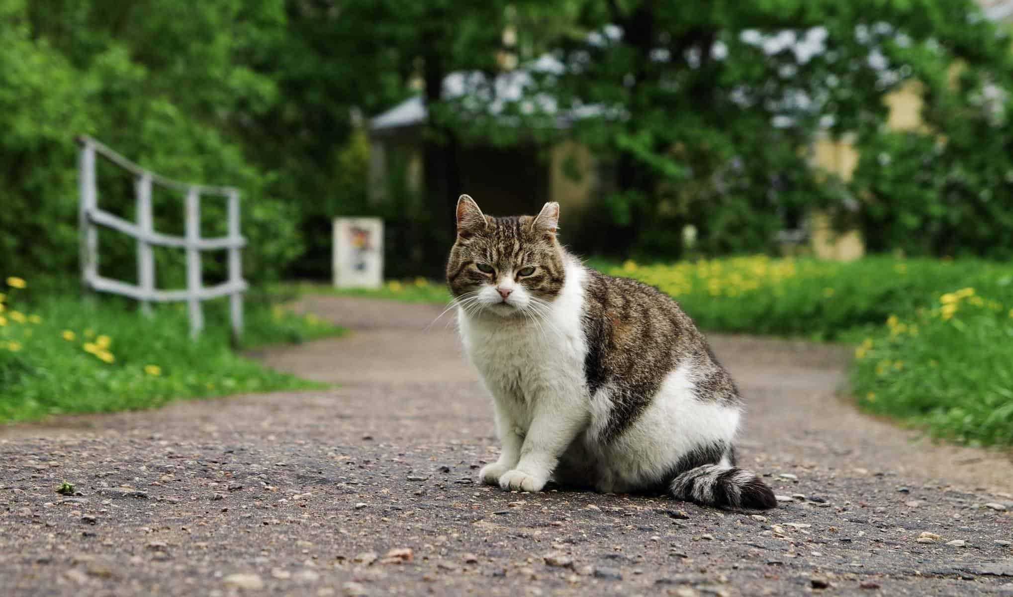 gato suelto