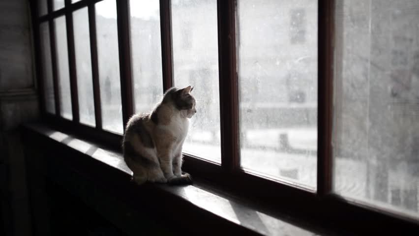 ¿Los gatos deben salir de casa?
